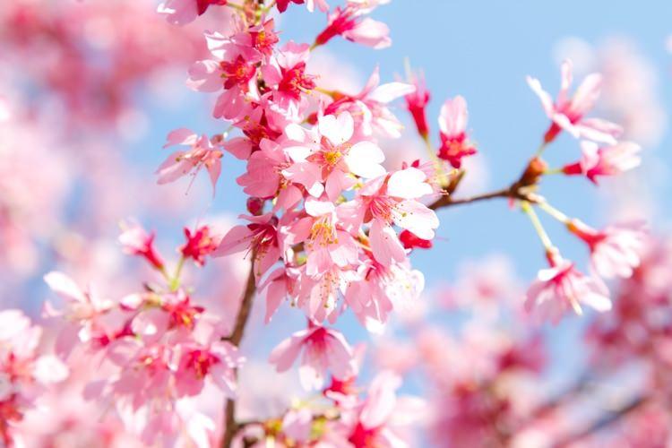 春だ♪心機一転♪入学受付中♪