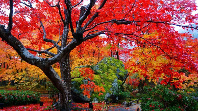 京都へ紅葉を見に行ってきました