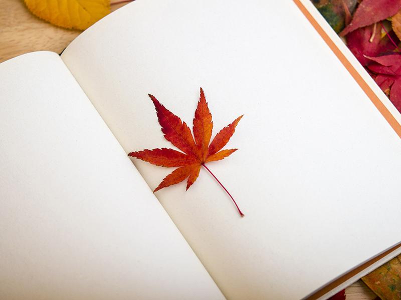秋と言われて何を想像しますか?